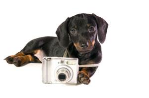 camera-puppy