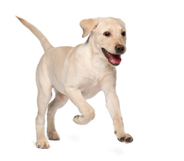 daycare-doggy