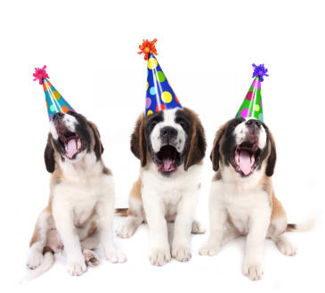 party-dogs